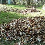 Piles of Leaves