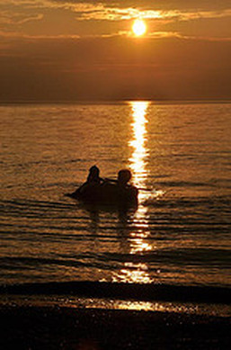 A couple swimming in the evening